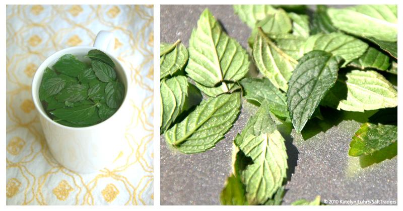 SaltyDogsBlog Mint Tea