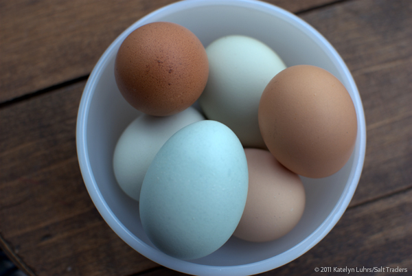 Eggs Bowl 2